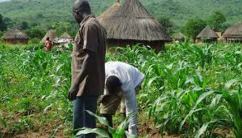 Invest in Agriculture – Nigerian Economy