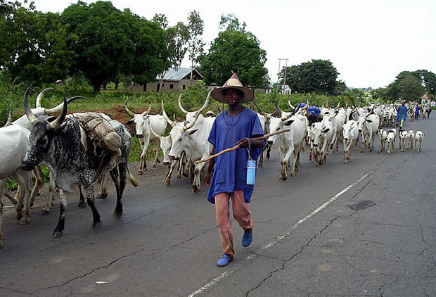 Ondo State Government At Loggerhead With The Presidency Over Herdsmen